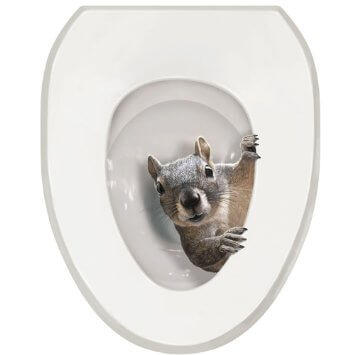 squirrel in a toilet